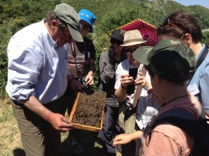 Local beekeeper shares his knowledge and honey