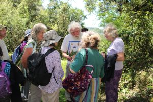 David Bellamy explains