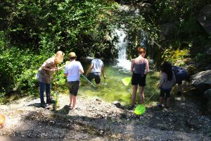 Waterfall pond dipping